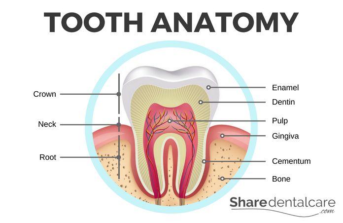 Origin of Tooth Sensitivity